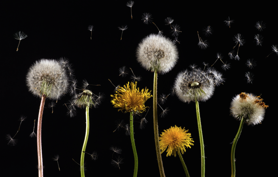 agopuntura e allergie