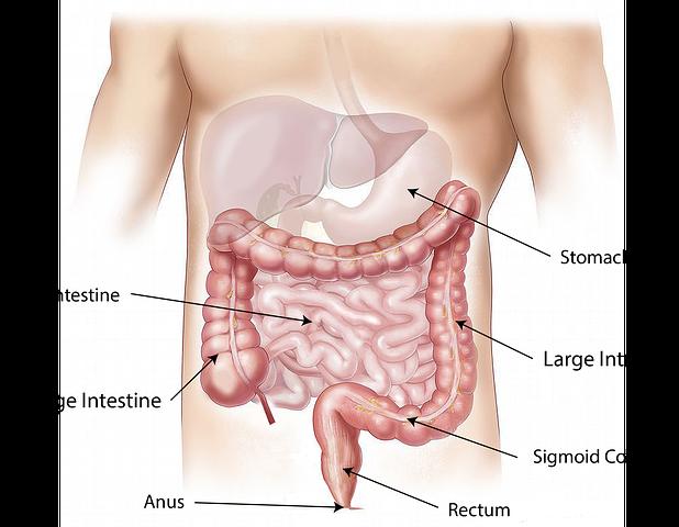 Gastroenterologo a domiclio Roma