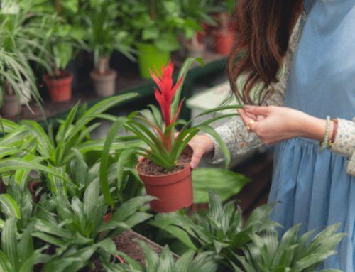 Ansia e Depressione: Perché i Dottori Prescrivono il Giardinaggio